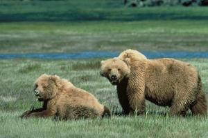 El cambio climático creó nuevos animales híbridos