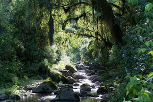Promueven la conservación de la biodiversidad en Tucumán