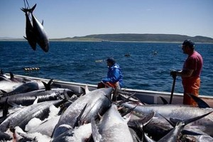 La pesca ilegal mueve hasta u$s 45.000 millones al año