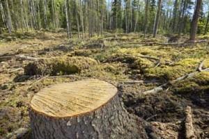 Noruega quitará su apoyo financiero a Brasil si sigue deforestando la Amazonia