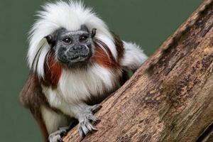 Hay 2.700 especies en riesgo de extinción en Colombia
