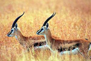 Ya hay más de 25.000 animales y plantas en riesgo de extinción