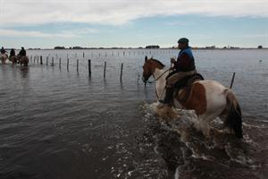 EXTREMOS-ARGENTINA-INUNDACIONES-CAMPO-2014-SOJA