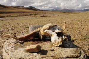 Científicos norteamericanos predicen una extinción masiva para el año 2100