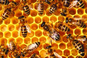 Desarrollan un programa de apicultura sustentable en Misiones