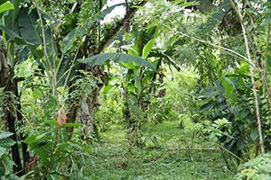 Ecuador y Cambodia debaten sobre el manejo sostenible de los bosques