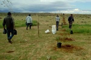 Plantan cortinas forestales contra la degradación del suelo en la Puna