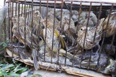 Ambiente rescató 700 aves del tráfico ilegal de fauna