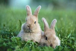 Piden prohibir el uso de conejos y ratones en la industria cosmética