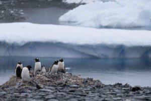 Advierten que el cambio climático podría acabar con los pingüinos